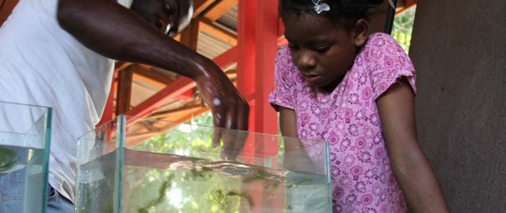 Aquariums in Haiti's classrooms are helping teachers instruct students in biology and conservation.
