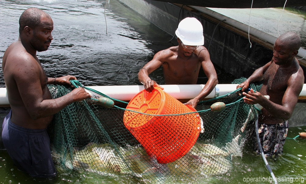 At a time when fish are in high demand and scarce in local waters, a team of Haitians are learning how to farm tilapia.