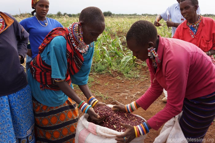 Harvesting beans and other drought-resistant crops brings life to the village of Kimana as a result of an Operation Blessing farming initiative in the community