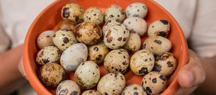 A bowl filled with quail eggs.