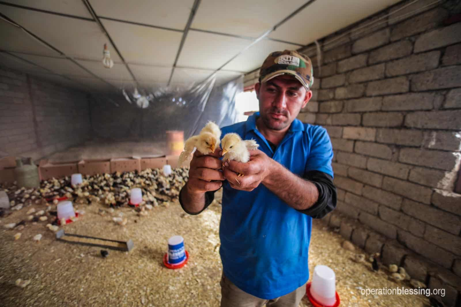 A man holds up baby chickens that will help restart business in the farmland outside Qaraqosh.