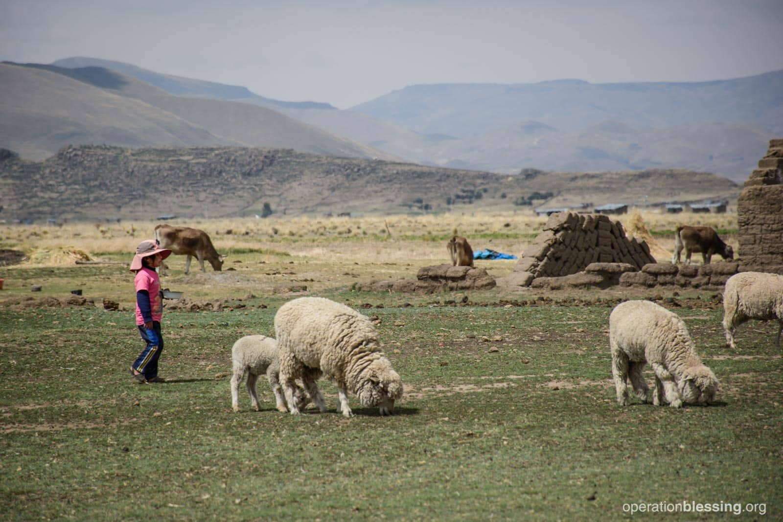 Nicol's remote village features sheep and mountains.