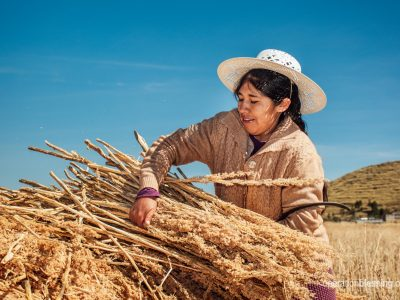 Silvia can harvest quinoa in Peru thanks to healthcare from Operation Blessing friends.