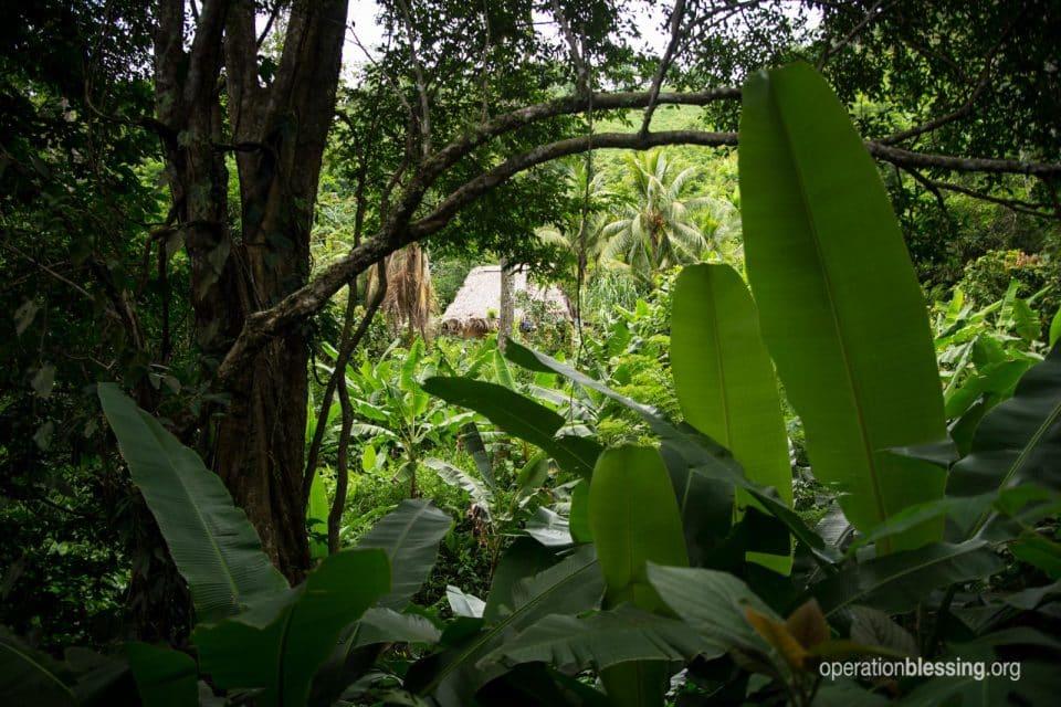 A scene of jungle and a hut in rural Honduras.